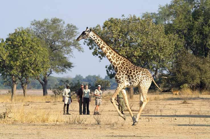 A walking safari in Zambia