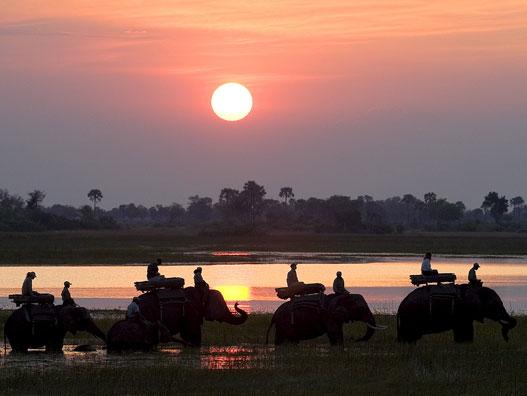 Elephant back riding at Abu camp