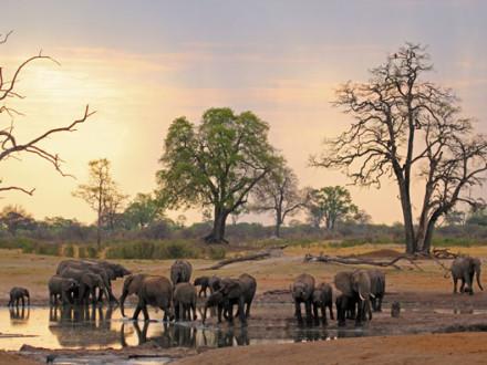 Elephants at Hwange waterhole