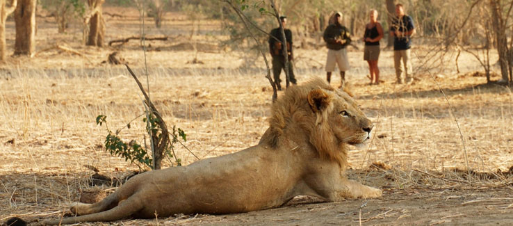 Escorted African Safaris