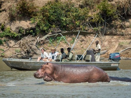Hippo viewing from a boat