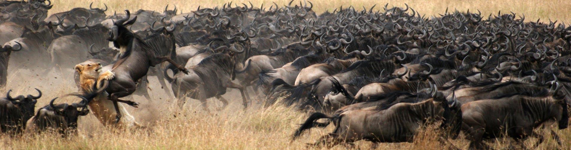 Kenya Safari Masai Mara Great Plains Conservation
