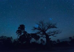 Baobab And Night Sky