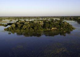 Botswana Jacana