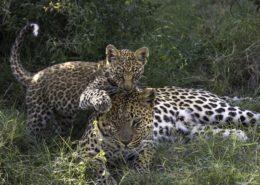 Botswana Jao Reserve