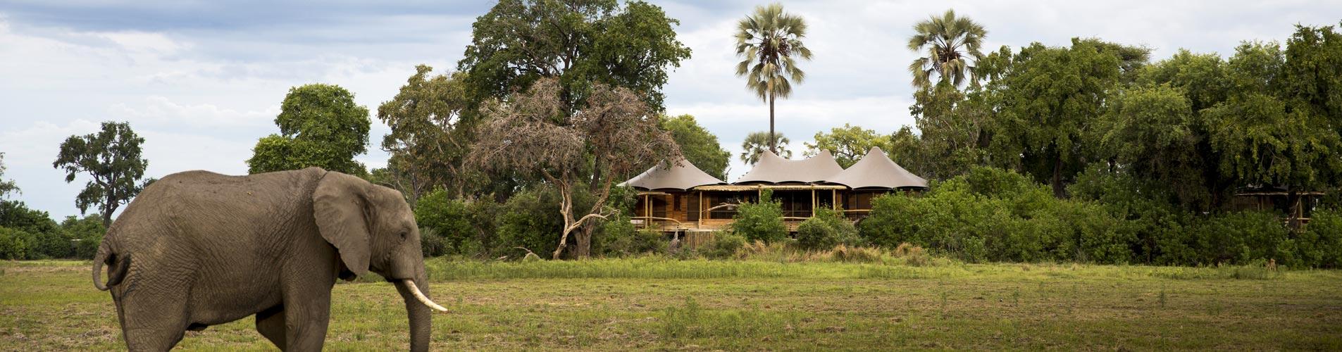 Botswana Safaris Mombo