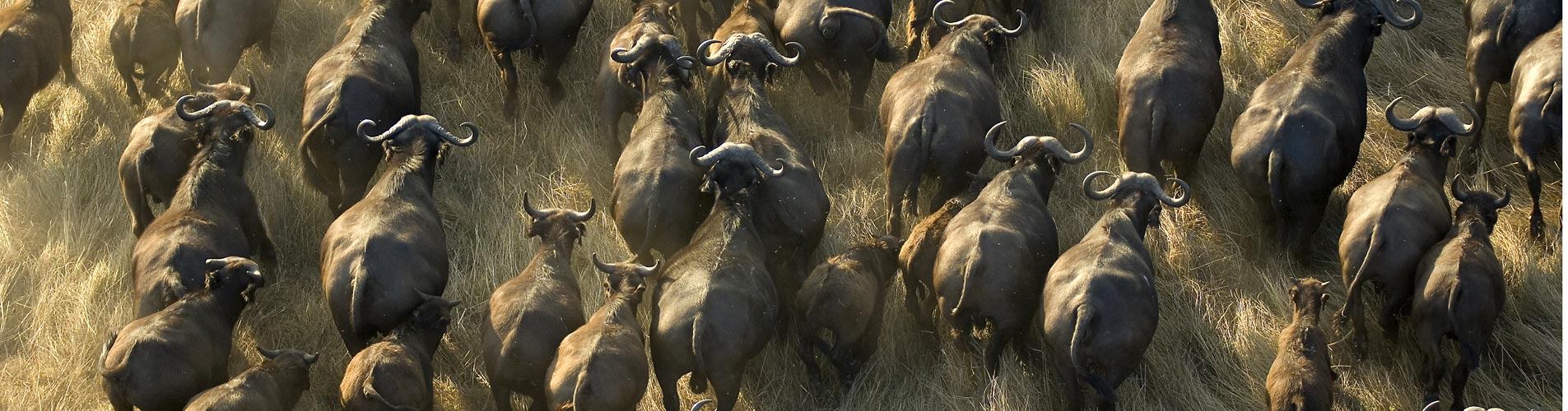 Busanga Plains in Zambia