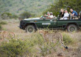 Cheetahs at Kwandw
