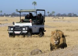 Davisons Camp game drive