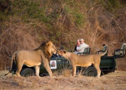 Day Game Drives