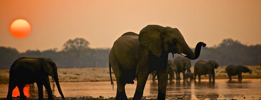 Top Wildlife Destinations, Hwange National Park