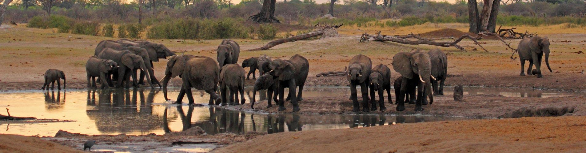 Elephants In Hwange in Zimbabwe