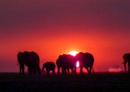 Elephants on Fire