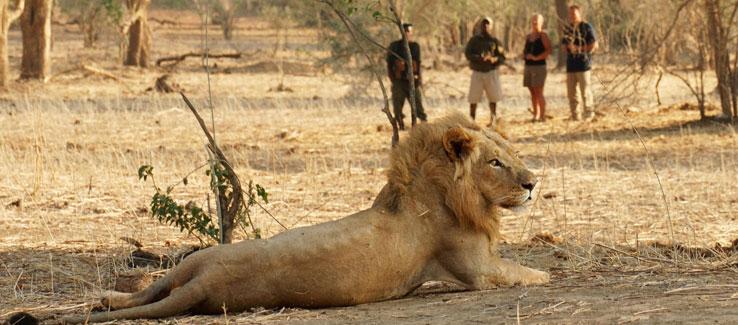 Escorted African Safaris