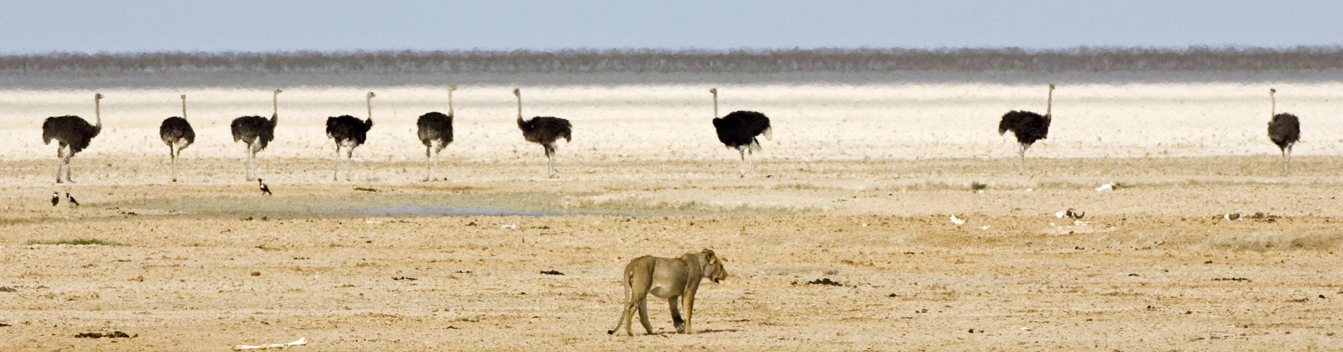 Etosha wildlife on Namibia Safaris