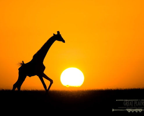 Travel Tips Galloping Into The Sunset