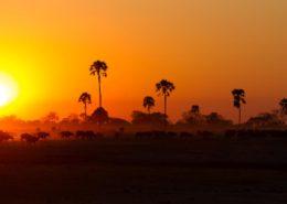 Linkwasha Sunset