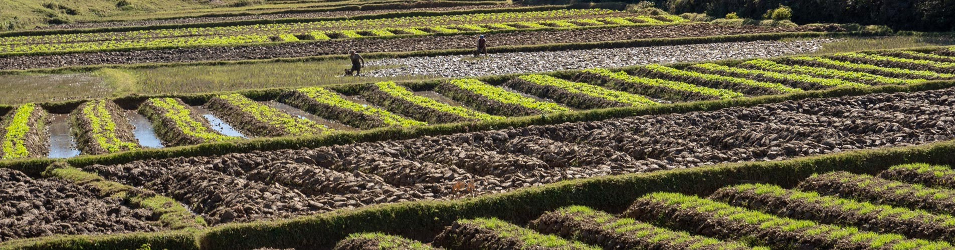 Madagascar Rice Paddies