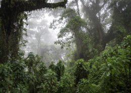 Misty Forest Scenes, Rwanda