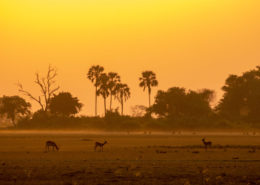 Misty Okavango Morning at Sunrise