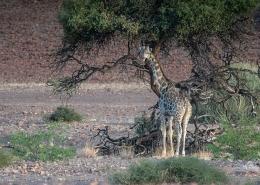 Nambia Desert Wildlife