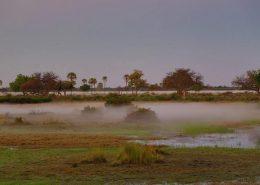 Okavango Delta Mist