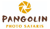 Pangolin Photo Safaris