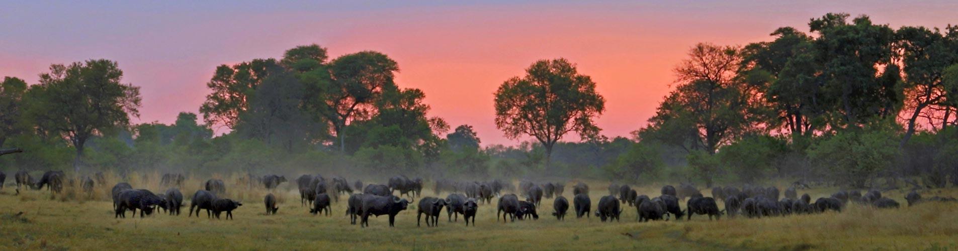 Photographic Safari Workshops in the Okavango
