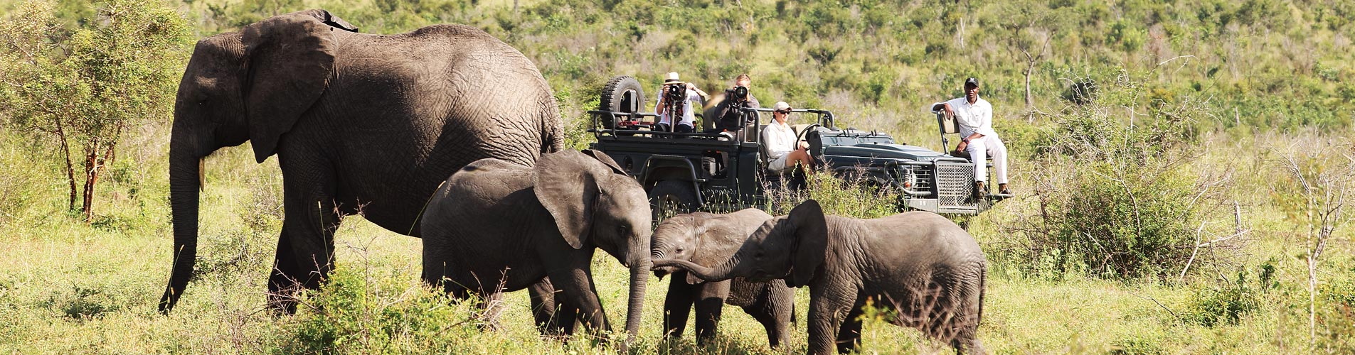 Custom Photographic Safari, Elephant Family