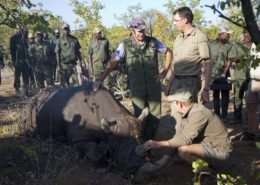 Rhino Relocation