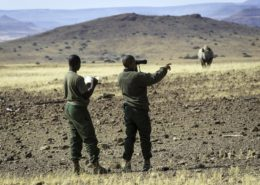 Safari Rhino Tracking Namibia