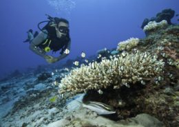 Scuba Diving South Africa