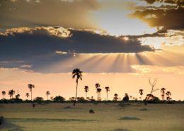 Seasons for Photography Safaris