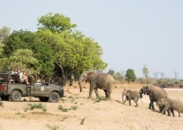 Shenton Safaris Game Drive Elephant