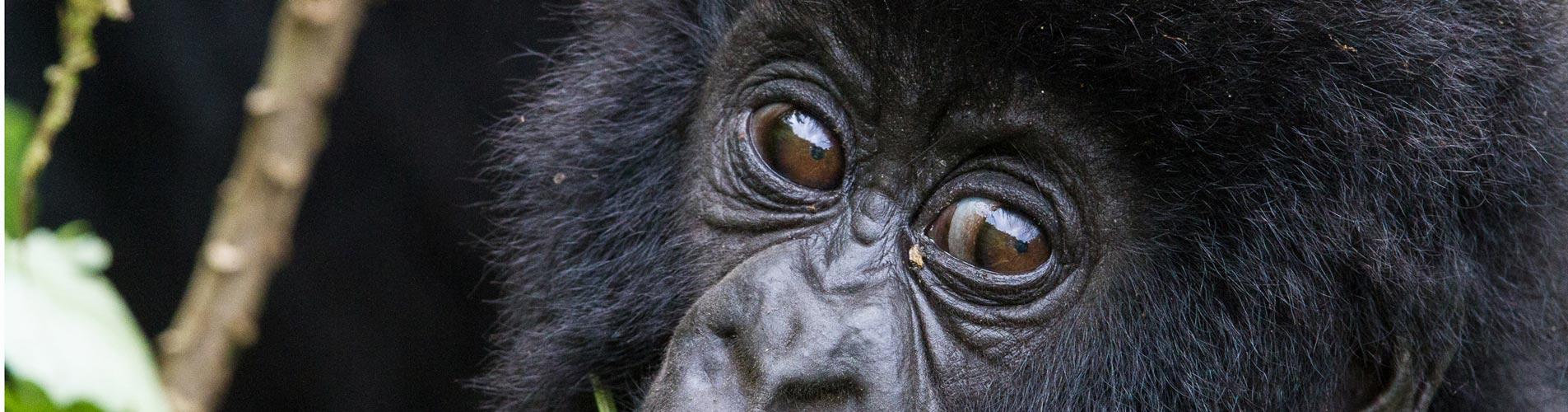 Soulful Eyes in Rwanda