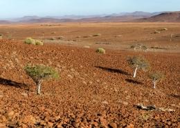 Stark Namibia Desert Landscape