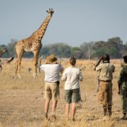 How to decide where to travel on Safari
