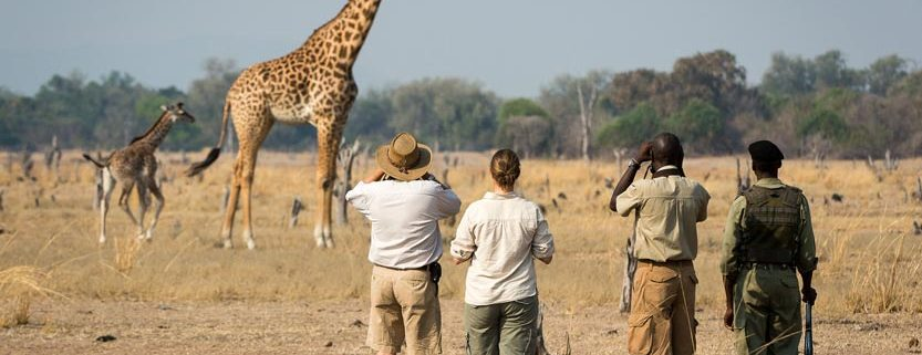 Image result for where to go on safari