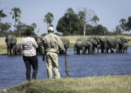 Walking Safaris Hwange