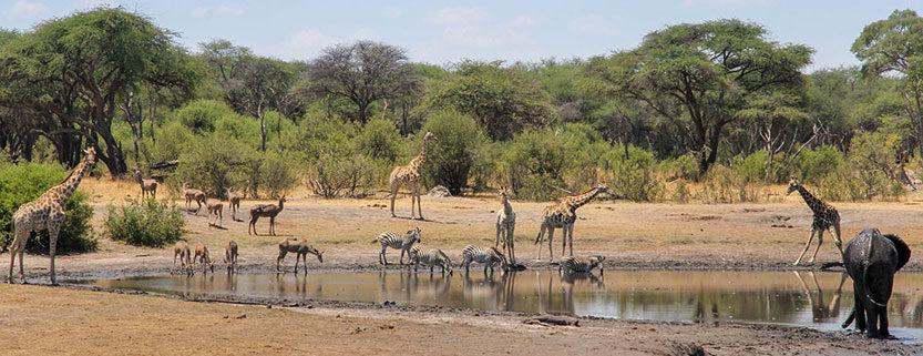 Zimbabwe Wildlife